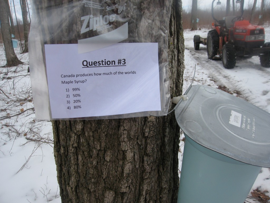 Sugarbush Trivia