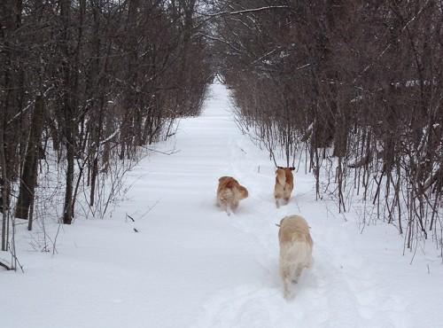 threedog